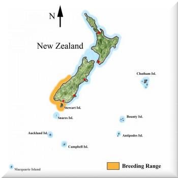 tucnak-novozelandsky---vyskyt.png